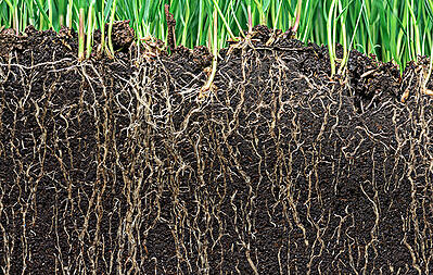 soil_conditioing_roots