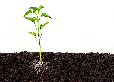 soil_conditioning_plant